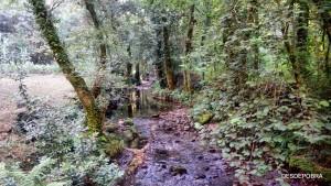 El sonido del río, Pobra do Caramiñal